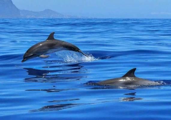Delfin Tour Sahl Hasheesh