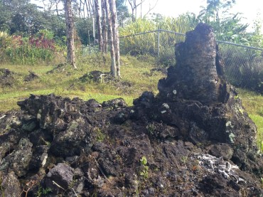 Charred trees still intact after the lava flow.