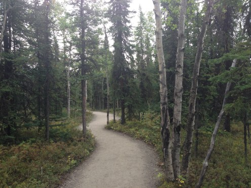 The Spruce Tree Trail.