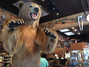 We finally saw a bear up close and personal in Anchorage.
