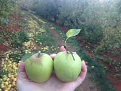 In love with apple picking.