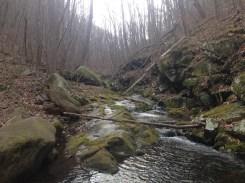 The bubbling serenity of Cornelius Creek.