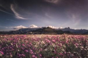 Wildflowers near Montusi Mountain Lodge