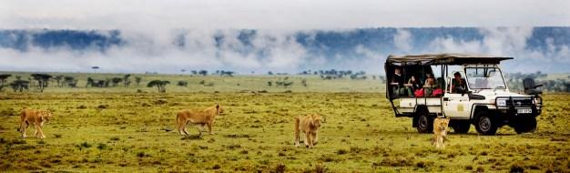 Game drive from Karen Blixen Camp, Masai Mara