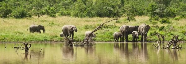 Elephants at Kicheche Laikipia