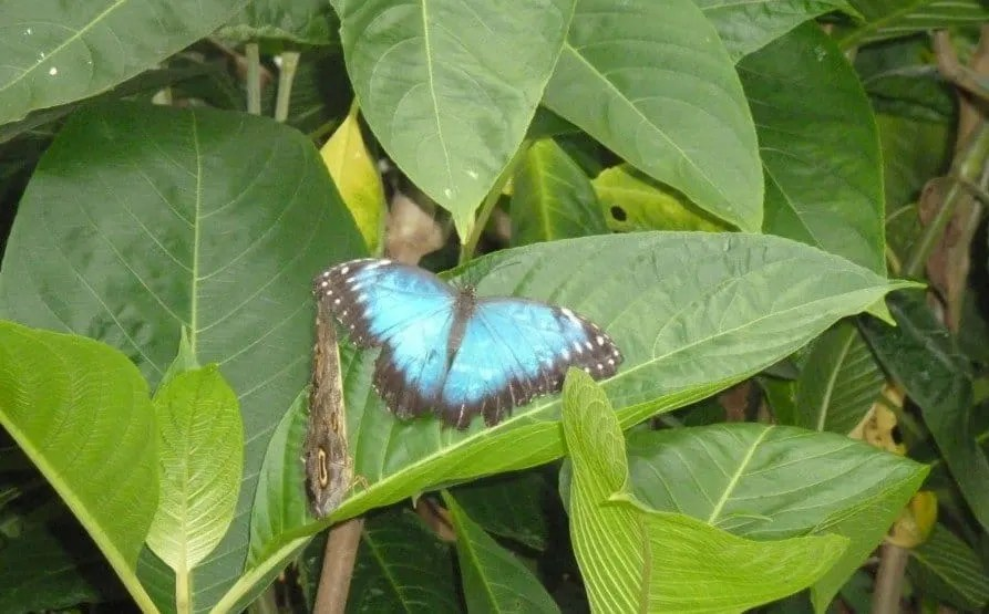 Visit the butterfly farm With Kids In Stratford-Upon-Avon www.extraordinarychaos.com