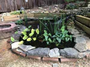 Home Improvement Koi Pond