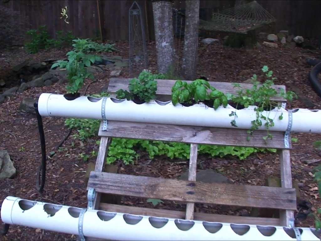 Adding Plants To Hydroponics Filter