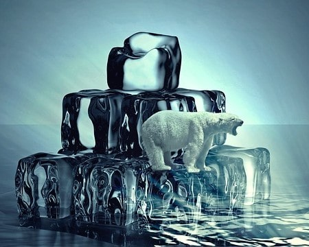 Ice cold polar bear