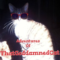 Chronicles of ThatGoddamnedCat- Meet Max