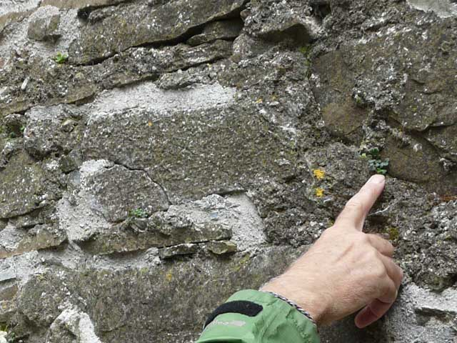 Church_wall_chasmophytes