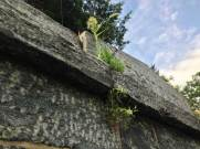 Crypt roof line, Sleepy Hollow Cemetery, New York.