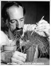 And old (1976) but favorite image of Don Gaff and a resurrection grass, possibly S. stapfianis. From the Monash University Archives