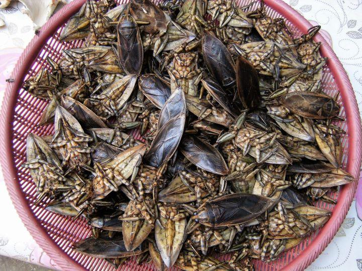 Grillos a la venta en mercado de Laos