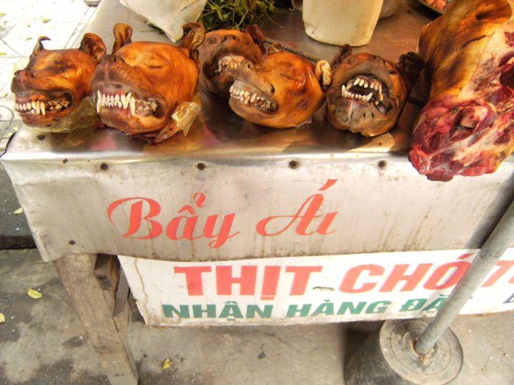 Perro delicatessen Vietnam