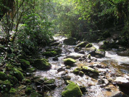 valle-del-cocora7