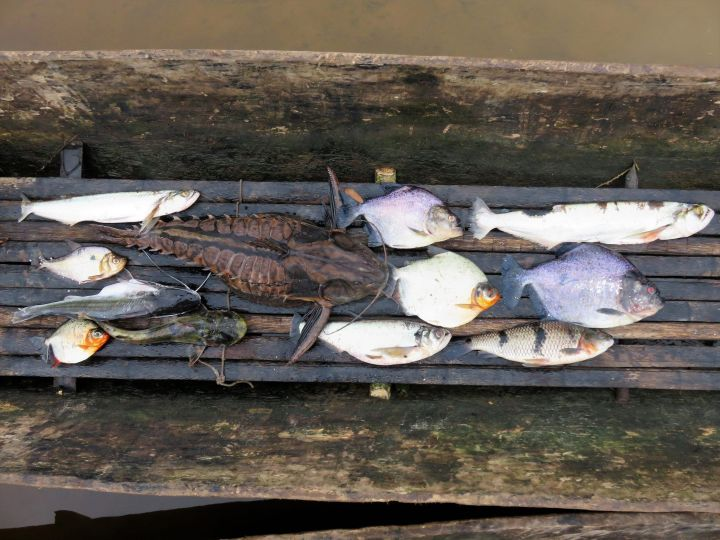 Pesca1