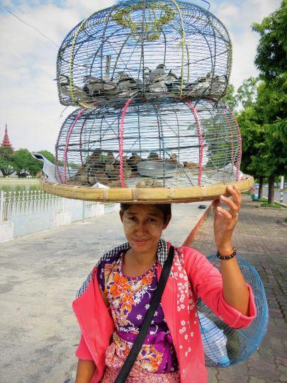 Vendedora de pájaros alrededor del palacio real, Mandalay