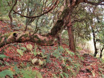 Bosque autóctono entre Lespar y Nangi