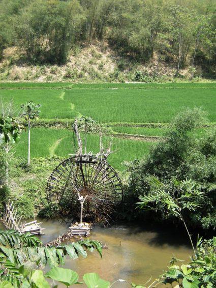 Noria en campos de arroz