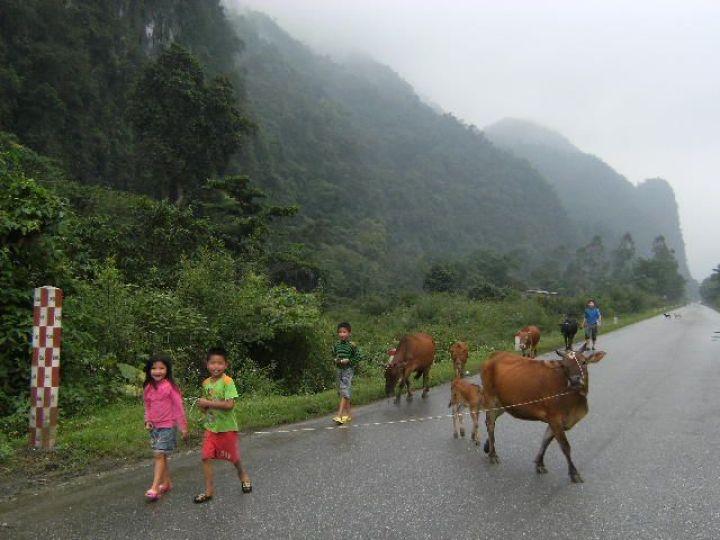 Carretera y vacas, Sudeste Asiático