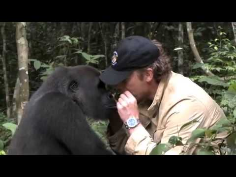 EXXO TV – The future of TV is HERE – Beautiful Gorilla Story