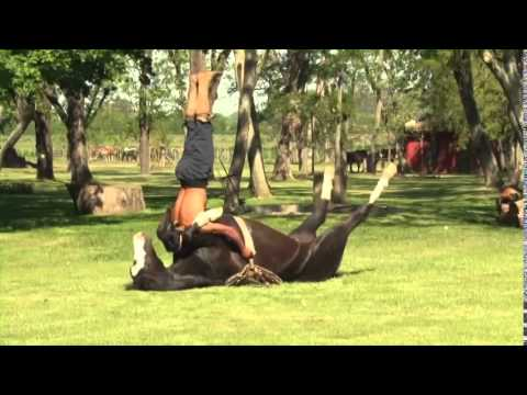 EXXO TV – The future of TV is HERE – Yoga with a Horse