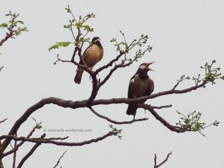 2Thirsty Birds2