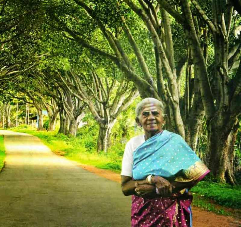 Thimmakka and her 3km stretch of Banyan Trees, Image Source: Srinivasan G
