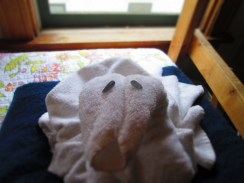 Day 356 7/2/14 Eyes of a Towel Animal