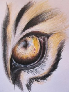 Day 344 6/20/14 Eye of The Tiger