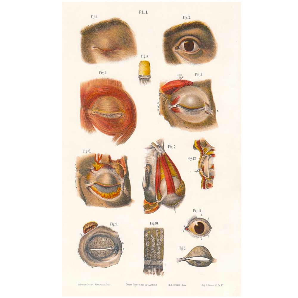 Anatomy & Physiology of the Eye 1850 PDF COPY - Antique Collectible ...