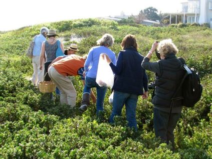 The Making Kos group forage for edible fynbos