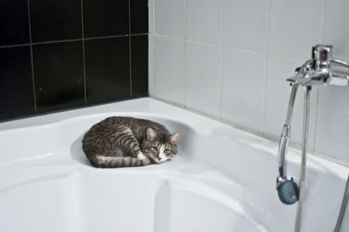 cat-1052060_1920
