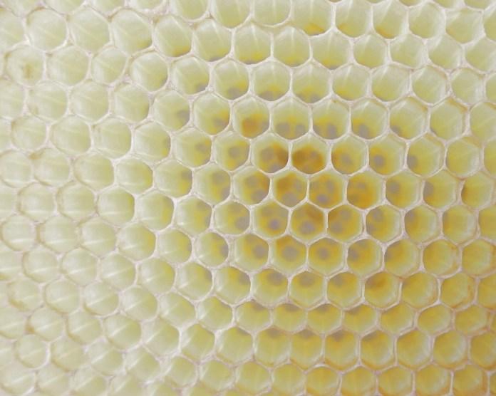honeycomb-818137_1920