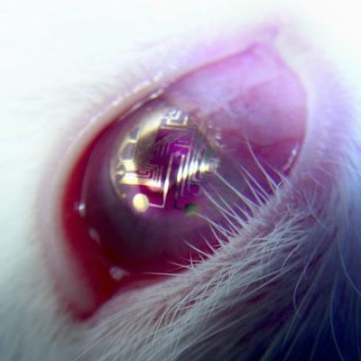 the eye future