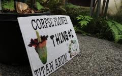 Corpse Flower, Thing 2, Blooms