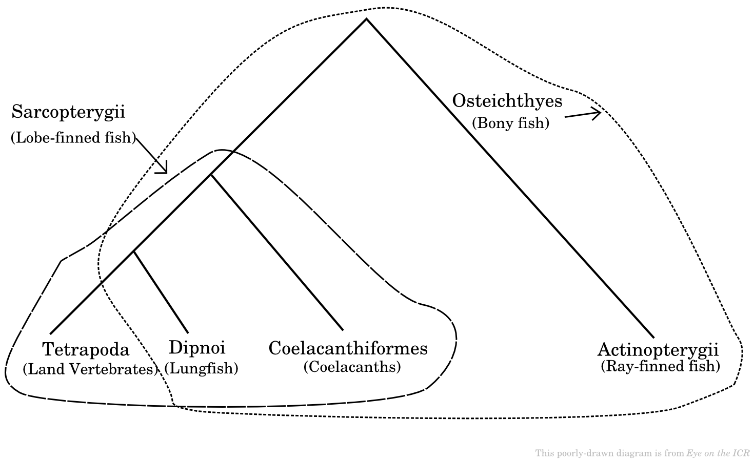 Coelacanth Adaptation