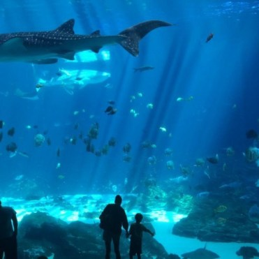 Atlanta-whalesharks-Ned-500x500