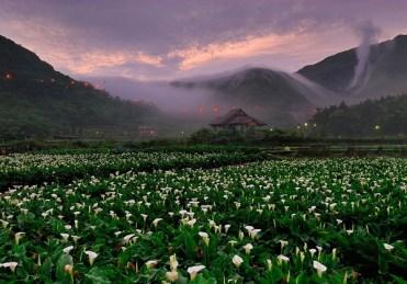 2018 Zhuzihu Calla Lily Festival (2)