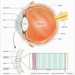 Corneal cross-linking for keratoconus treatment