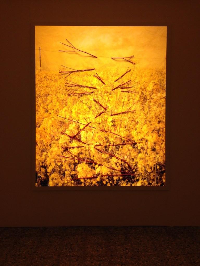 "Helen Sear, ""...the rest is "" 2015, Wales in Venice, 56th Biennale di Venezia, Photograph by Katy Hamer, 2015"