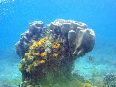 Corals of the Indian Ocean
