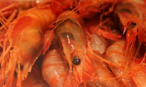 To shrimp or not? - Barcelona