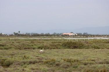 Flamingo -Delta Del Ebro, Spain - Eyes of a Lagos Boy