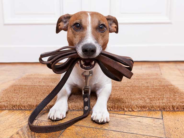 housesitting dog