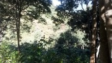 More forest