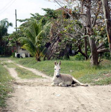 Donkey speedbump