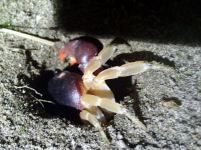 Crab going home
