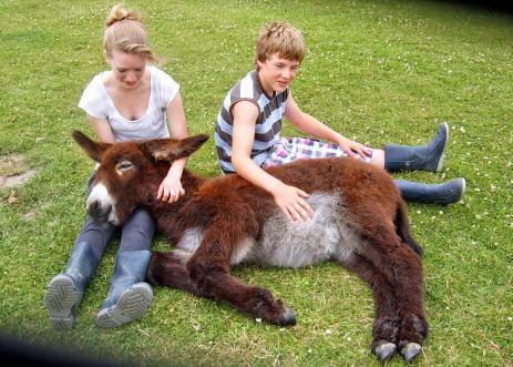Asinotherapie is een ander woord voor ezeltherapie; de therapeutische inzet van ezels. Het is een innovatieve behandeling voor kinderen en volwassenen met o.a autisme of andere beperkingen